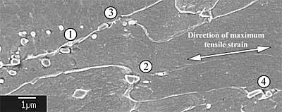 Fig.23. Scanning electron micrograph of cracked carbides below the unpropagated notch root. (1) The carbide crack was stopped at the carbide/matrix interface, and was subsequently blunted. (2) The cracked carbides tend to be aligned with the direction of maximum tensile strain, in accordance with the fibre-loading model. (3) Evidence of carbide/matrix debonding and microvoid growth. (4) The cracking of the carbide on the right may have prevented the cracking of the elongated carbide on its left through local stress relaxation