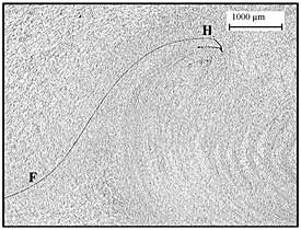 Fig.2. Macro-section of same weld showing left side 'hooking' feature