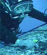 Fig.4. Diver Inspection