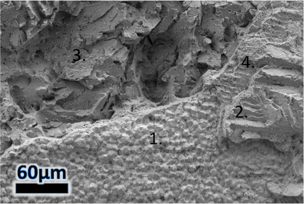 Figure 5 – SEM fractograph of multiple morphologies occurring at different distances from the fusion boundary: 1) a flat fracture region with crater-like features, 2) a terraced cleavage-like region, 3) failure within the steel HAZ and 4) a transitio
