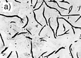 Fig.2. Microstructures of a) grey cast iron and